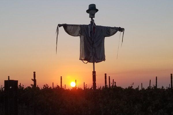 halloween scarecrow-min